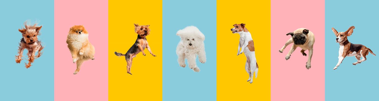 Hunde Online Spiele
